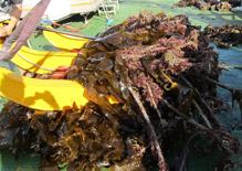 MBL Seaweed Survey